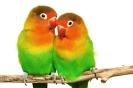 Que bonito es el amor